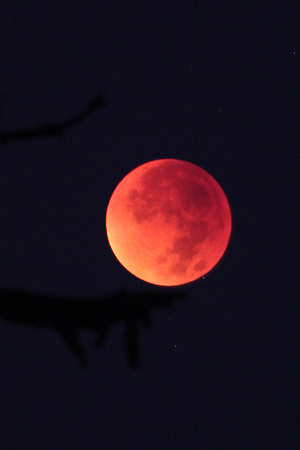 Total Lunar Eclipse September 27, 2015